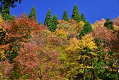 錦秋の大山