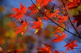秋だから紅葉パシャリ _・)2