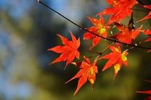 秋だから紅葉パシャリ|_・)1