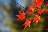 秋だから紅葉パシャリ _・)1