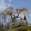 与一野のしだれ桜下からパシャリ _・)