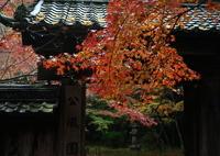 CANON Canon EOS 7D Mark IIで撮影した(錦秋石山寺 公風園)の写真(画像)
