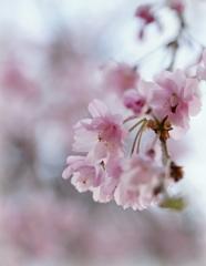 春うらら ♪