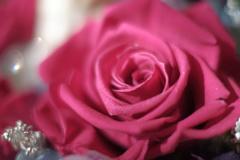 やっぱり薔薇が好き。