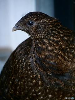 ケージの鳥。