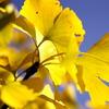秋の青空と…