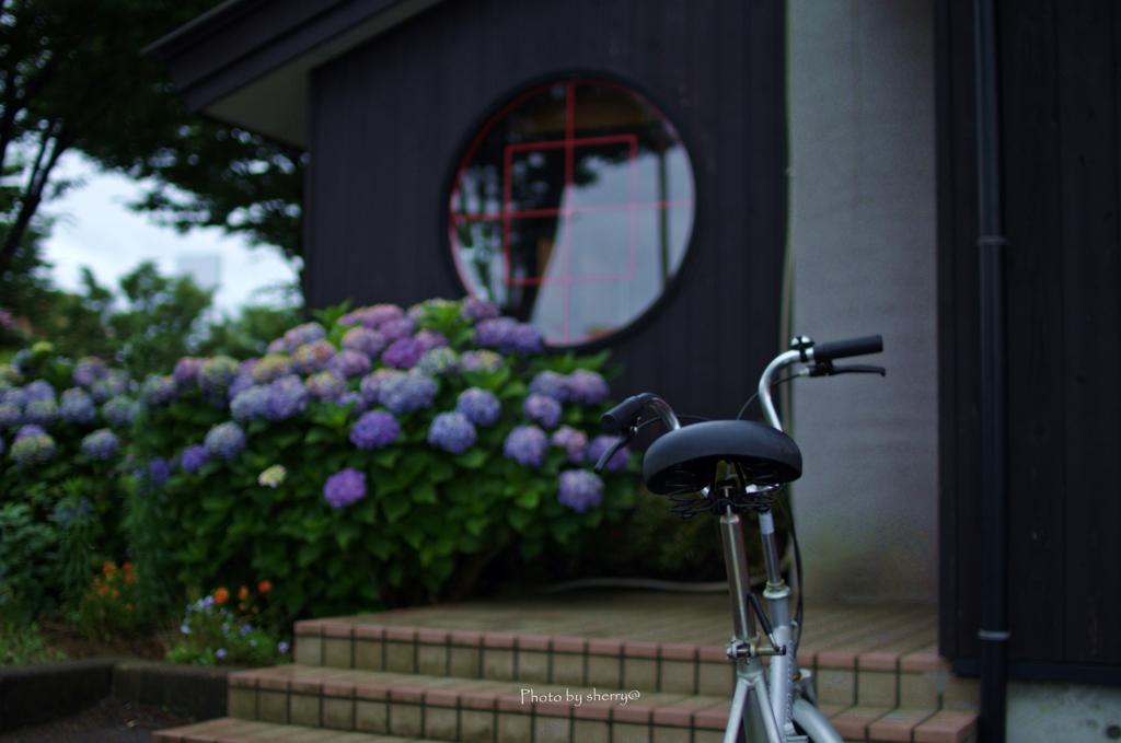 自転車と紫陽花と…