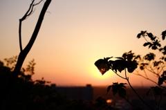 夕焼けの葉っぱ