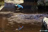 翡翠の飛翔と水鏡Ⅵ