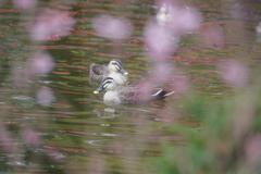 春色に泳ぐ・・・