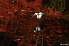 紅葉を映す水鏡