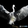 美しき翼Ⅳ
