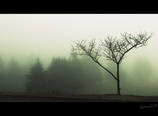 We got lost in the fog
