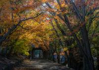 NIKON NIKON D850で撮影した(Cut off autumn)の写真(画像)