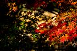 fiery autumn color