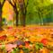 Found it autumn!!