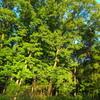 シャトレーゼ工場の駐車場の森の木