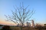 落葉後の木