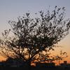 夕焼けと木