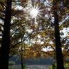 石神井公園 秋