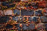 トンバイ塀の秋