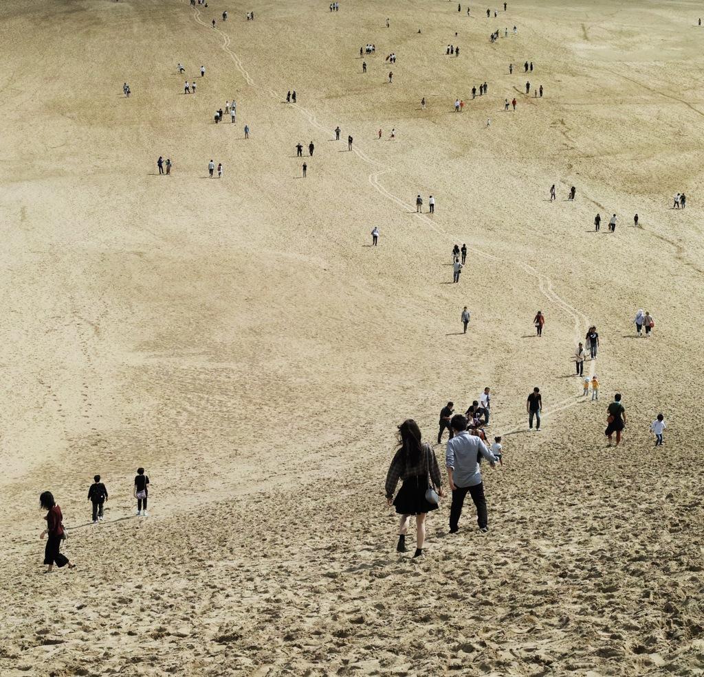 砂丘にできた道