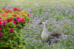 花の庭にお出かけ