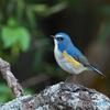 幸せの青い鳥♡