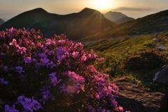 高嶺の花々