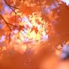 秋々する光景
