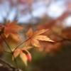 秋の一コマ
