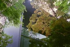 ご隠居(Nikon SP)の試写(根津美術館編) その7