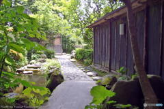 梅雨の晴れ間の宝泉院(再) その1