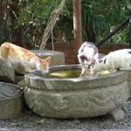 RICOH IMAGING PENTAX MX-1で撮影した(哲学の道の猫 その3)の写真(画像)