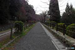冬の散歩道・・・