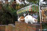年の瀬の哲猫 その2