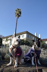 ここはカリフォルニアだよ、横浜の、、、