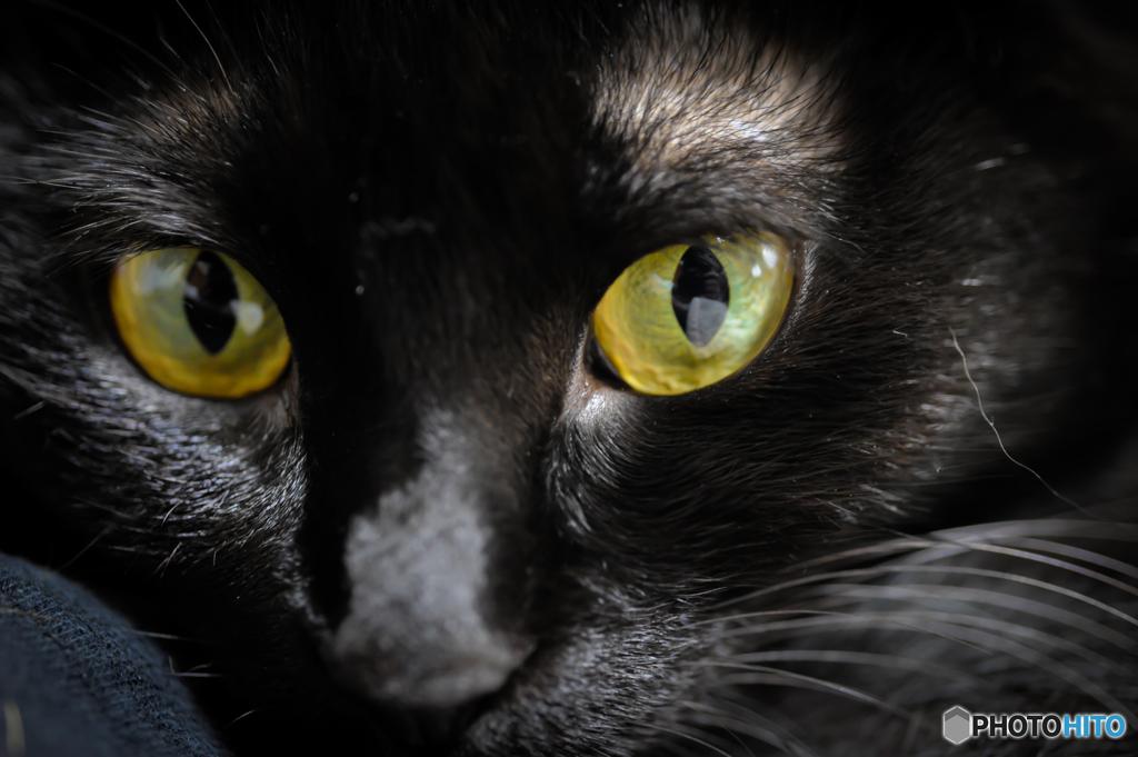 黒猫きーちゃん