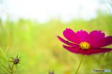 花の上でお散歩