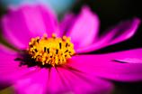 輝く花~表~