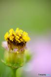 小さなハートの花