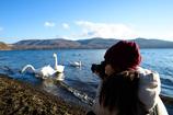 白鳥を撮る