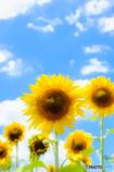 夏色の風景