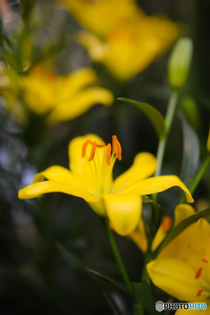 黄色の元気