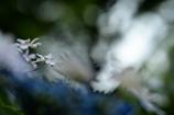 梅雨空の花