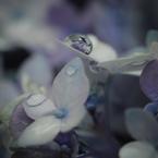 NIKON NIKON D700で撮影した(水の珠)の写真(画像)