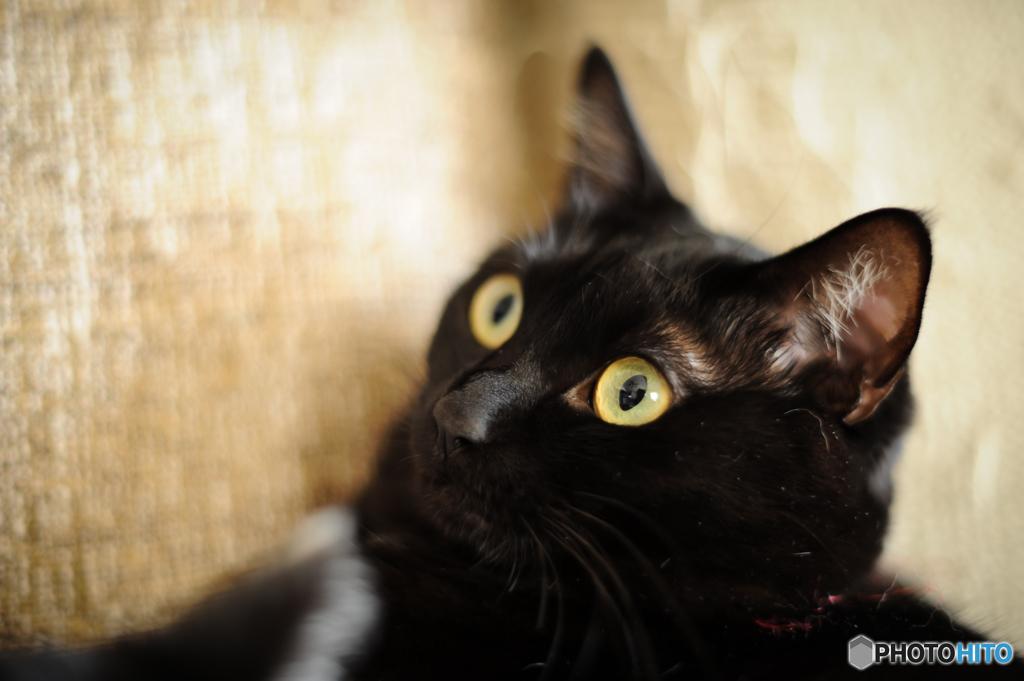 黒いアクマきーちゃん