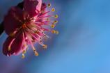 弾け輝く春