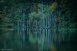 いつもの池にも秋が…