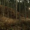 黄金色の森